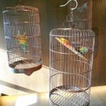Yang Ke, Bird Plane Cage, 2012 Courtesy of Themes & Variations, London