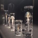 Steffen Dam Jellyfish Installation, photo (c) DT